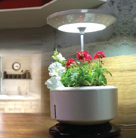 Desk Garden-02